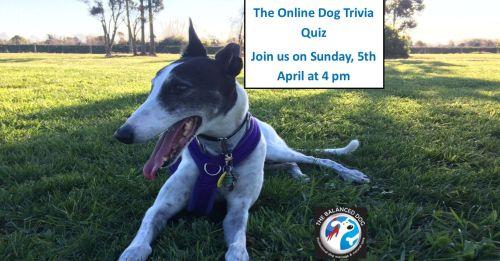 Dog Trivia Challenge for Facebook