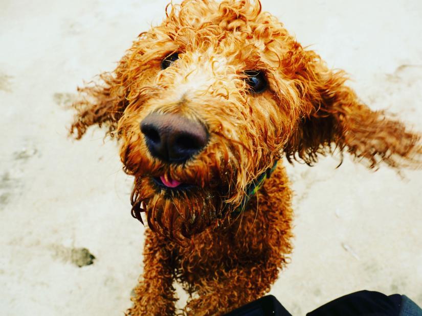 Dog photo oil spills