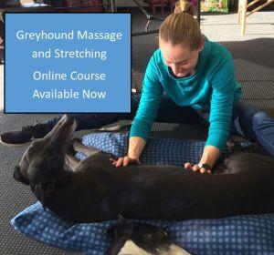 Greyhound massage and stretching